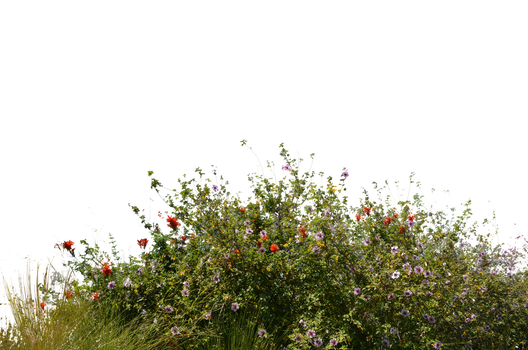 Flower field png. Favourites by backrupt on