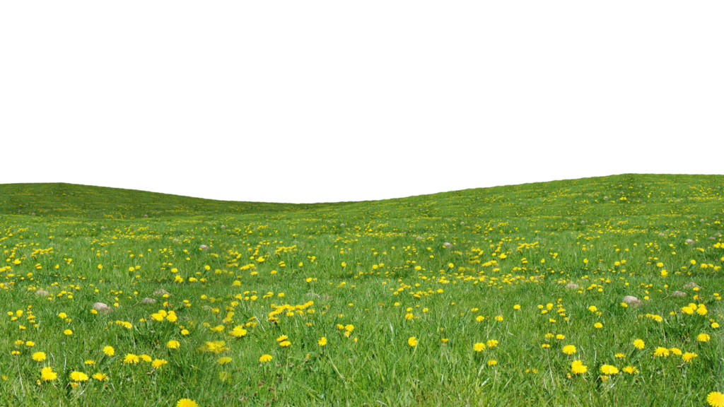 Flower field png. Miranas grass by heroys