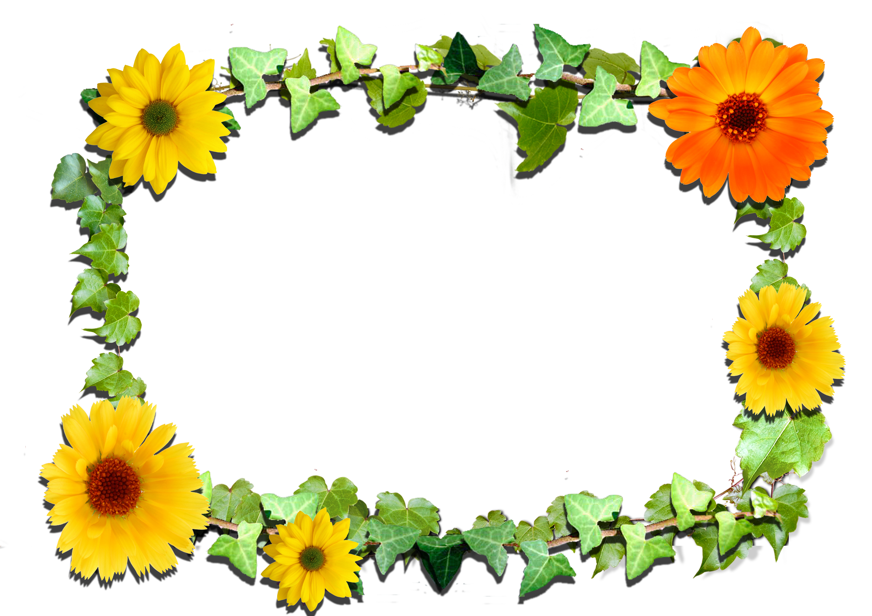 Flower font high definition png. Flowers frame gallery yopriceville