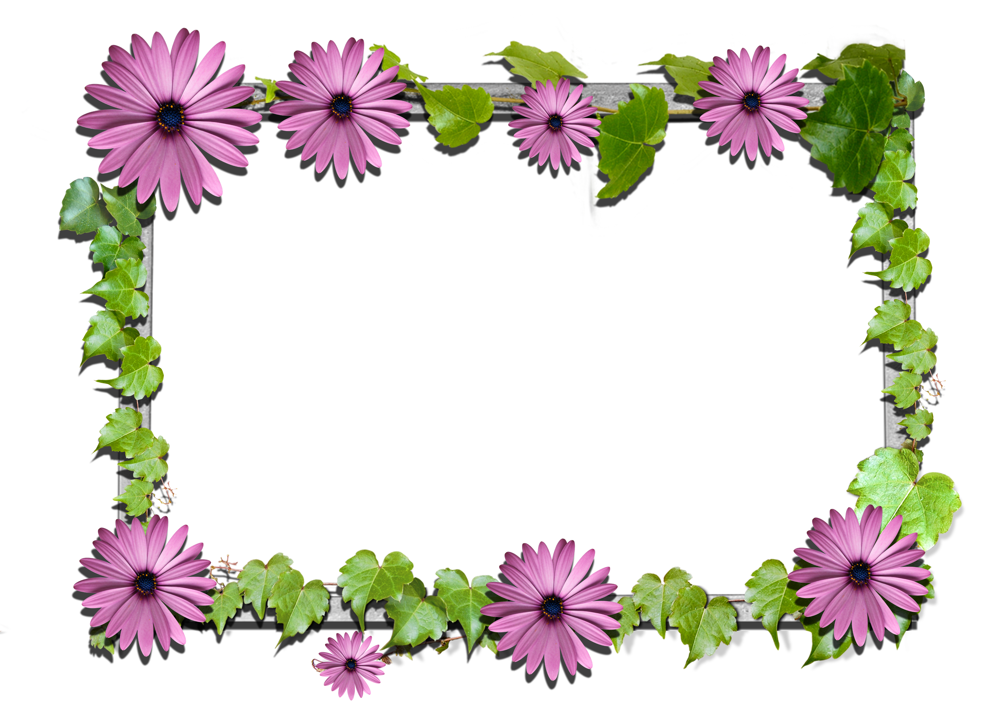 Flower frame png. Flowers gallery yopriceville high