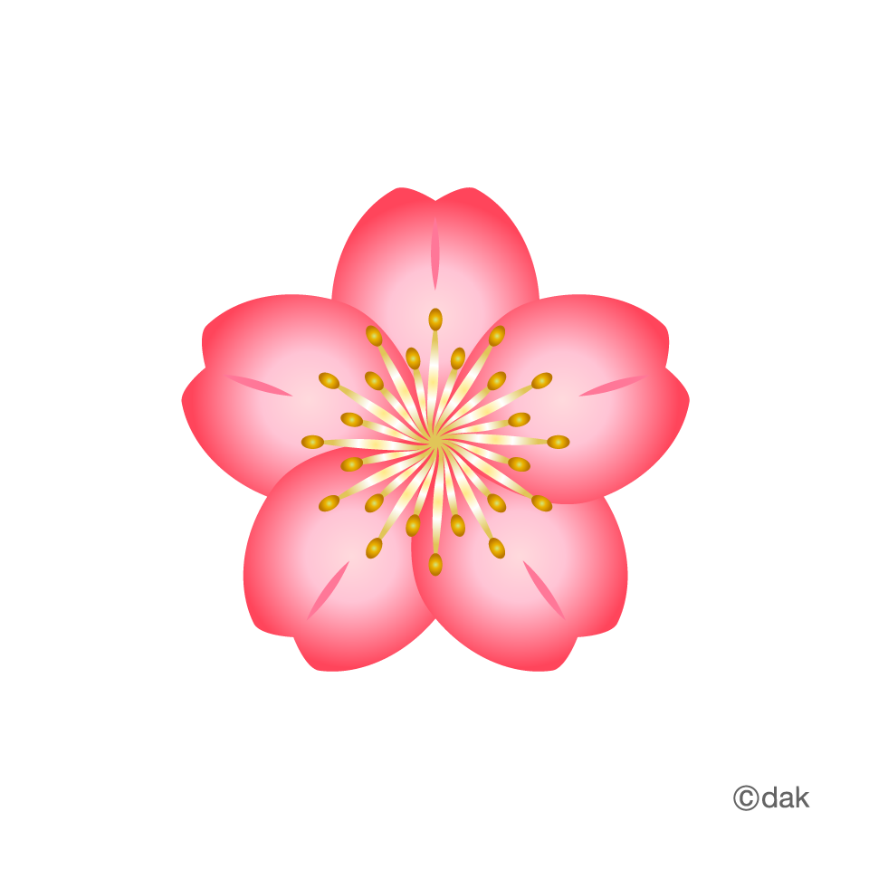 Flower graphic png. Free material cherry pictures