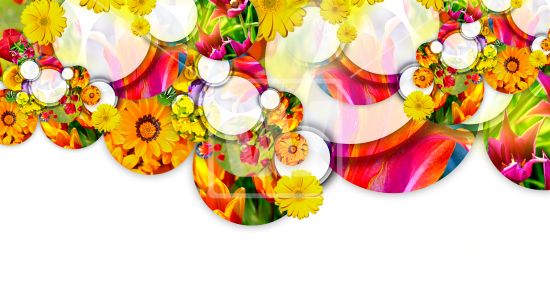 Flower header png. Spring welcomia imagery stock