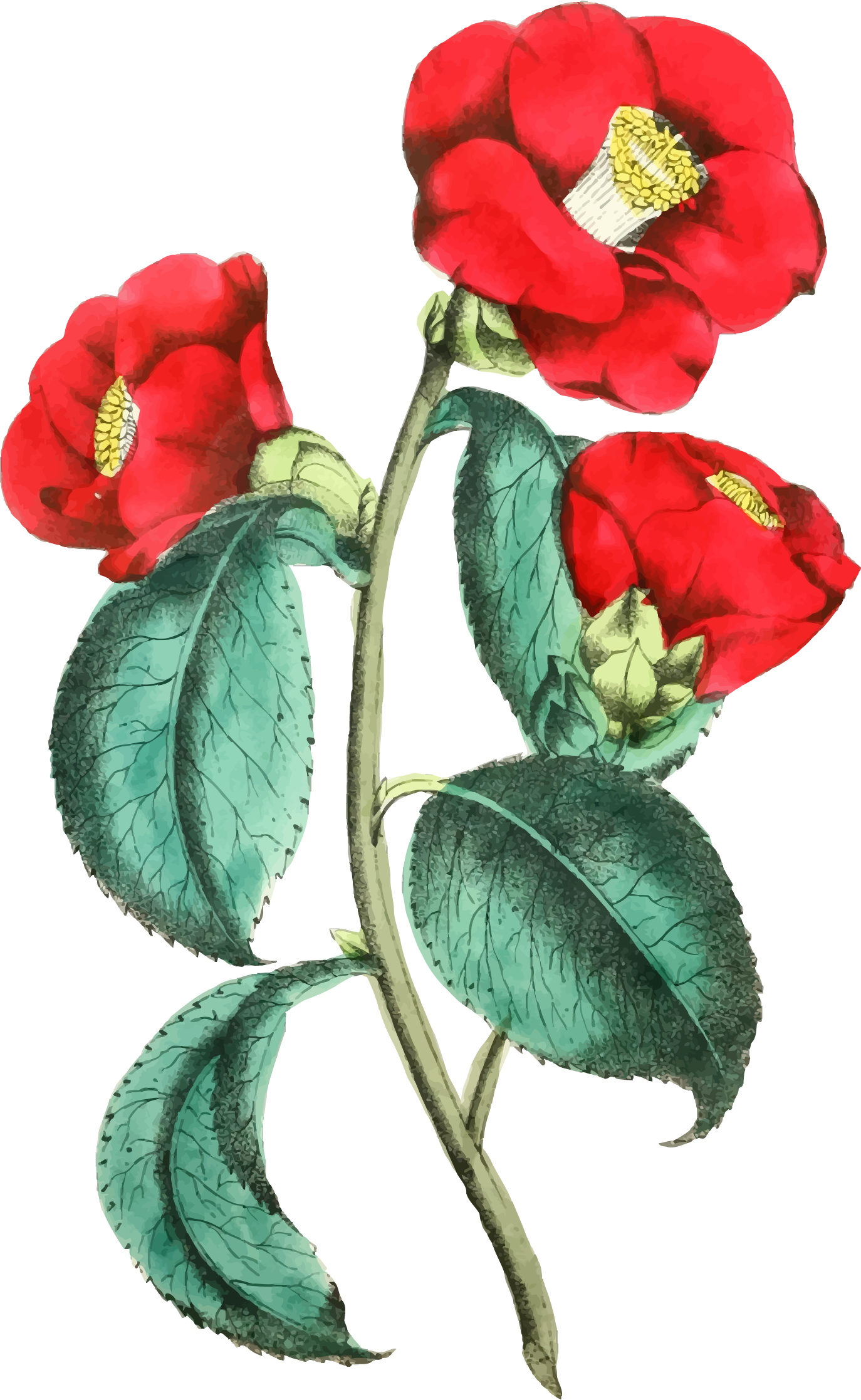 Flower illustration png. Icons free and downloads