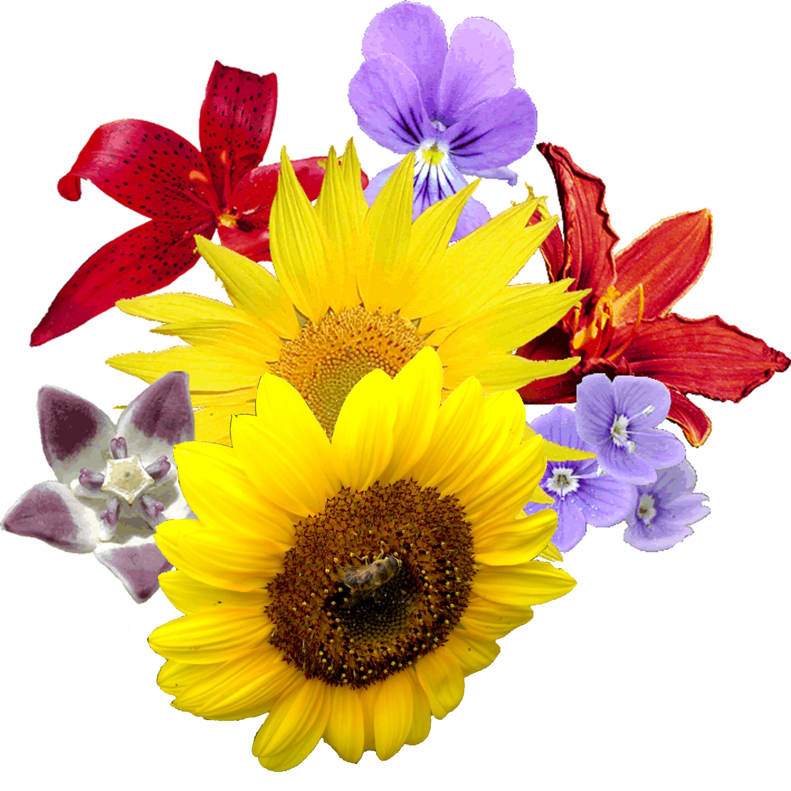 Flower images png. Flowers clipart transparent free