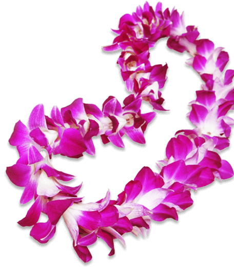 Hawaiian necklace png. Lei clipart free flowers