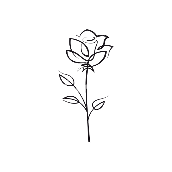 Flower outline png. Rose icons by canva