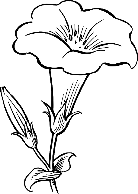 Drawing shade flower. Black outline white flowers