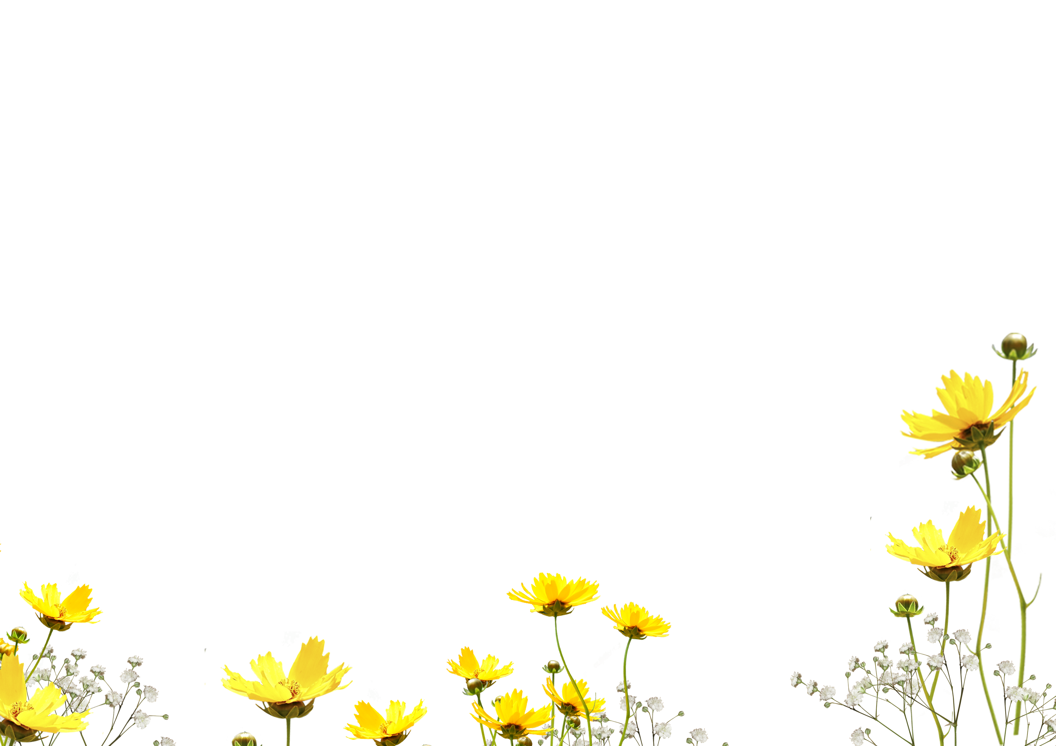 Flower overlay png. Free photo photoshop overlays