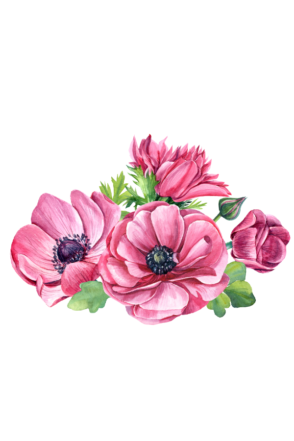 Flower overlays png. Spring pink free overlay