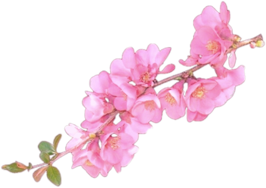 Flower overlay png. I love this for