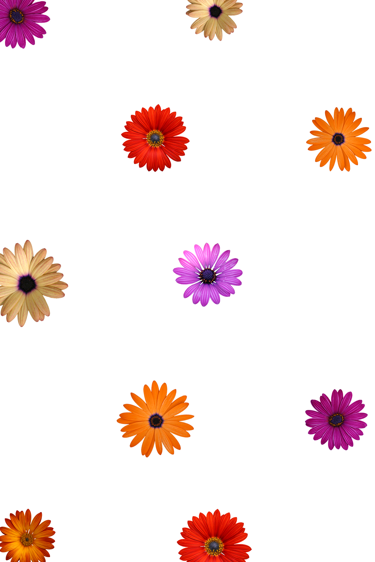 Flower overlays png. Customize the look of