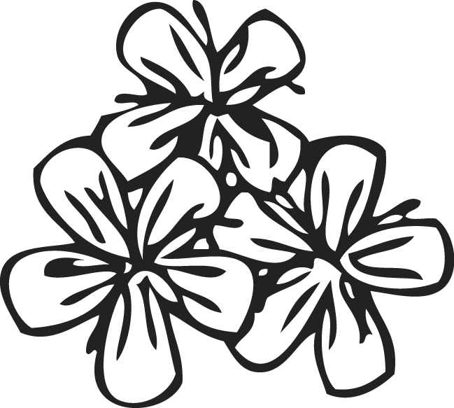Flower patterns png. Pattern by trudos on