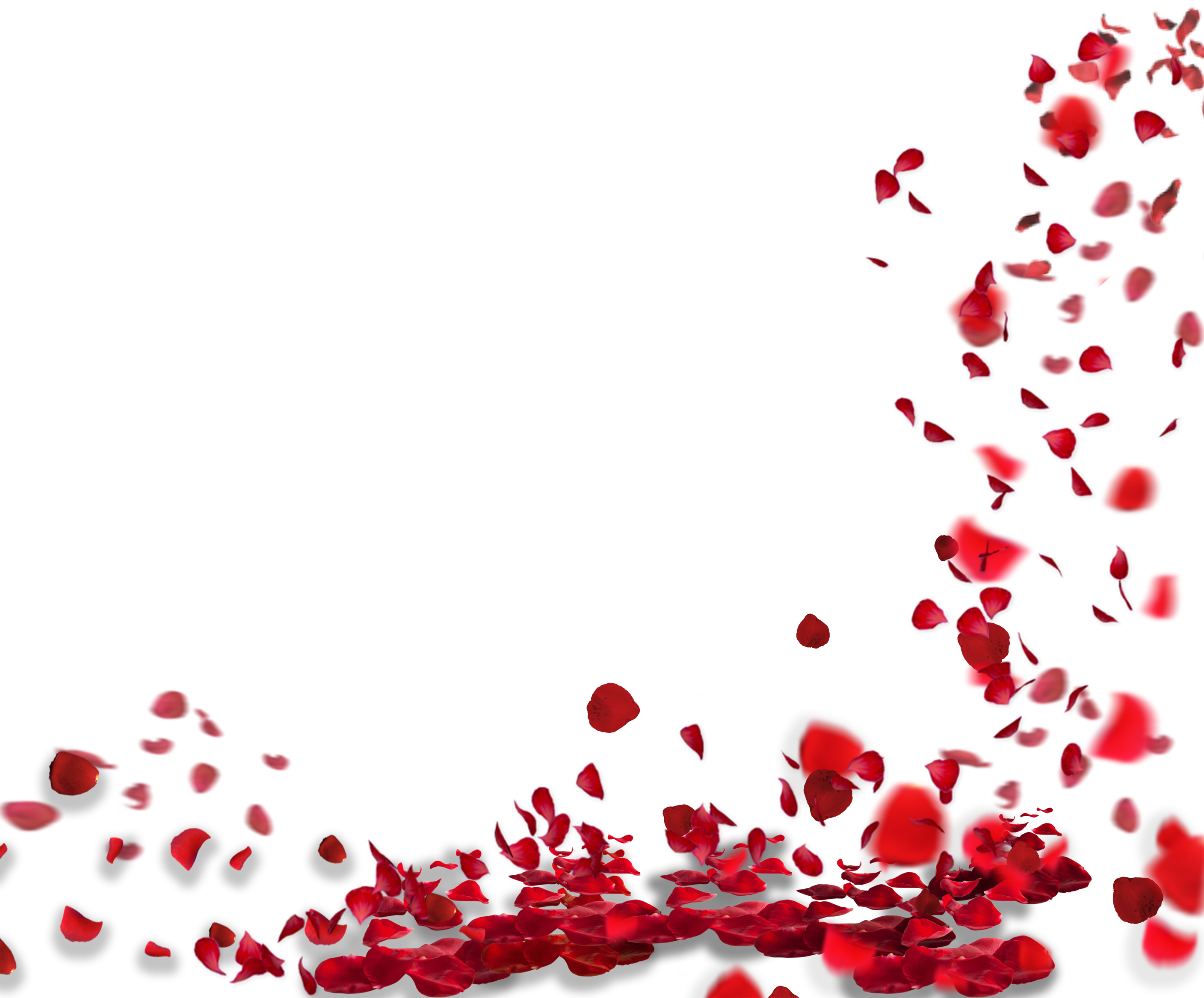 Rose petals png. Images hd quality free