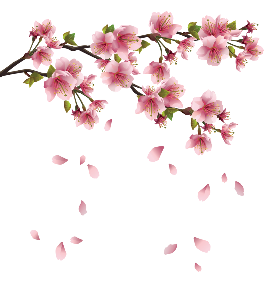 Flower petals falling png. Beautiful pink spring branch