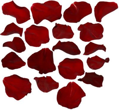 Red rose petals png. By two ladies stocks