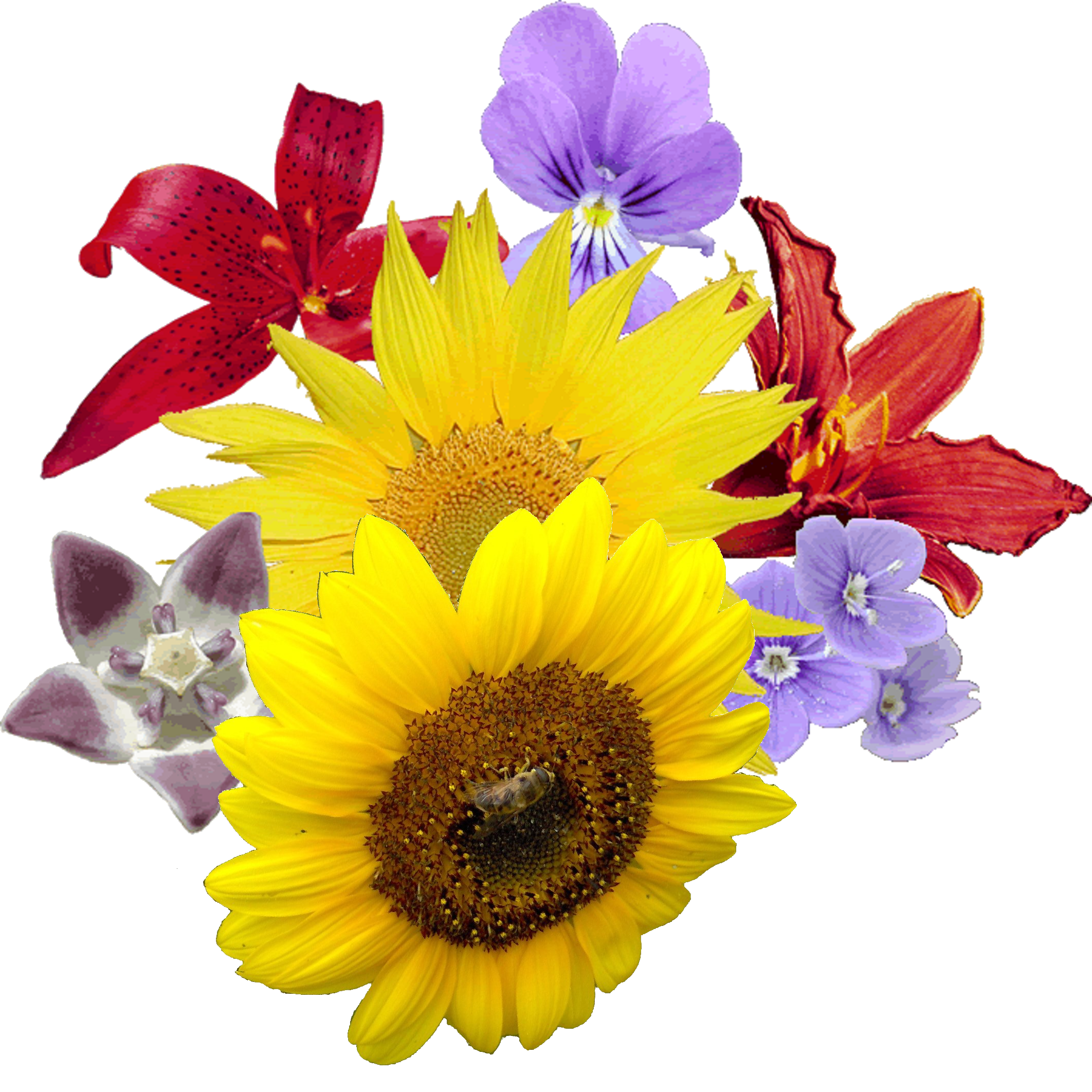 Flower pictures png. Bouquet of flowers images