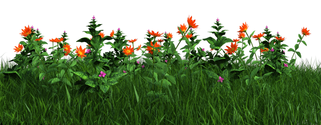 Flower plant png. Free grass and flowers