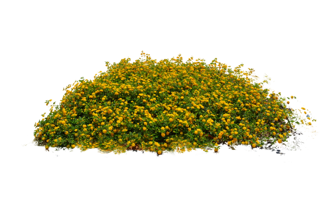 Flower plant png. Free plants flowers