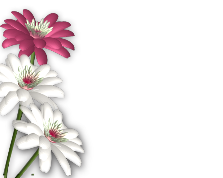 Flower png background. Flowers photoshop frames wallpapers