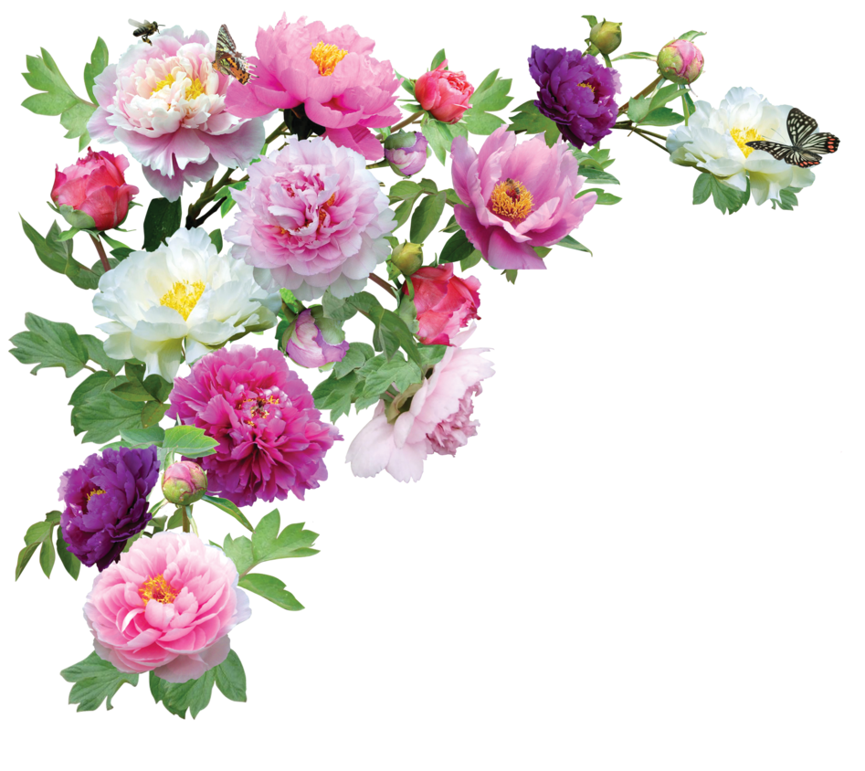 png of flowers