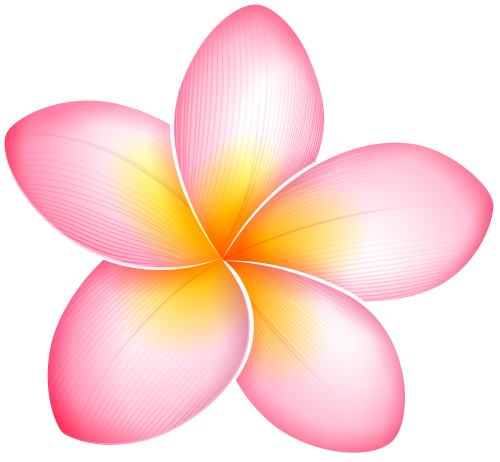 Exotic flower png. Pink clip art flowers