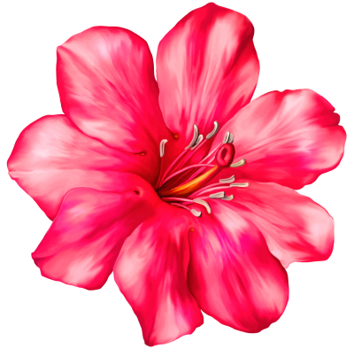 Flowers png clipart. Download flower free transparent