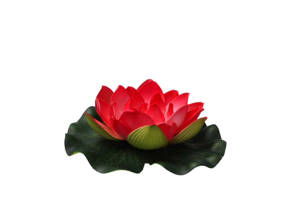 Flower png deviantart. By moonglowlilly on