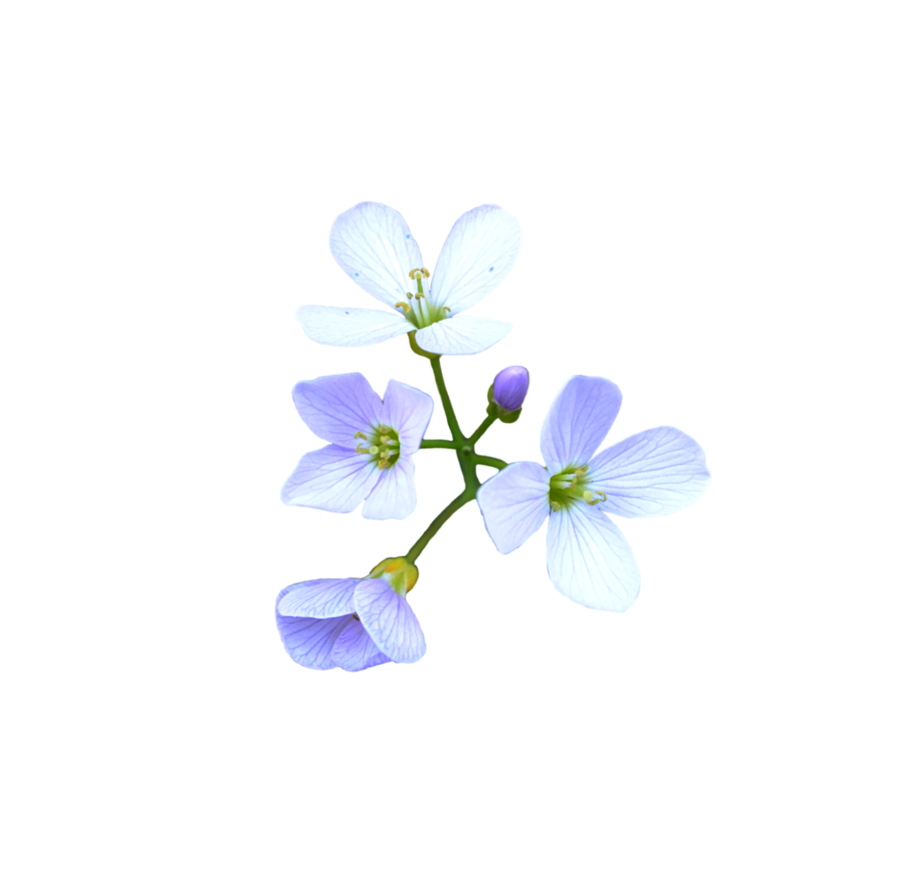 Flower png deviantart. Flowers by frankandcarystock on
