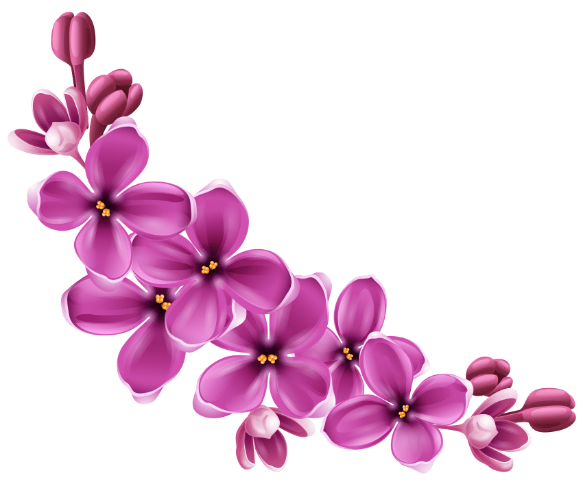 Flower png free. Flowers images toppng transparent