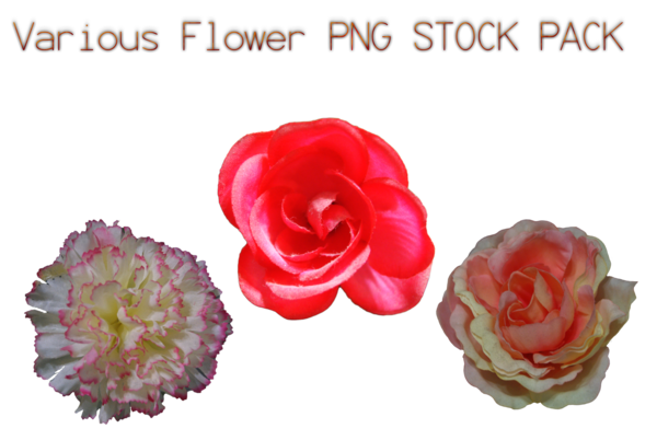Flower png pack. Various stock by karahrobinson