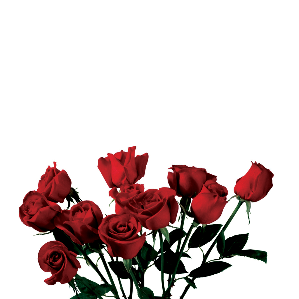 Tumblr flowers png. Rose love art interesting