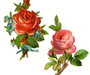 Roses png tumblr. Images about flowers
