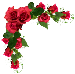 Vector bouquet rose watercolor. Flowers png free clipart