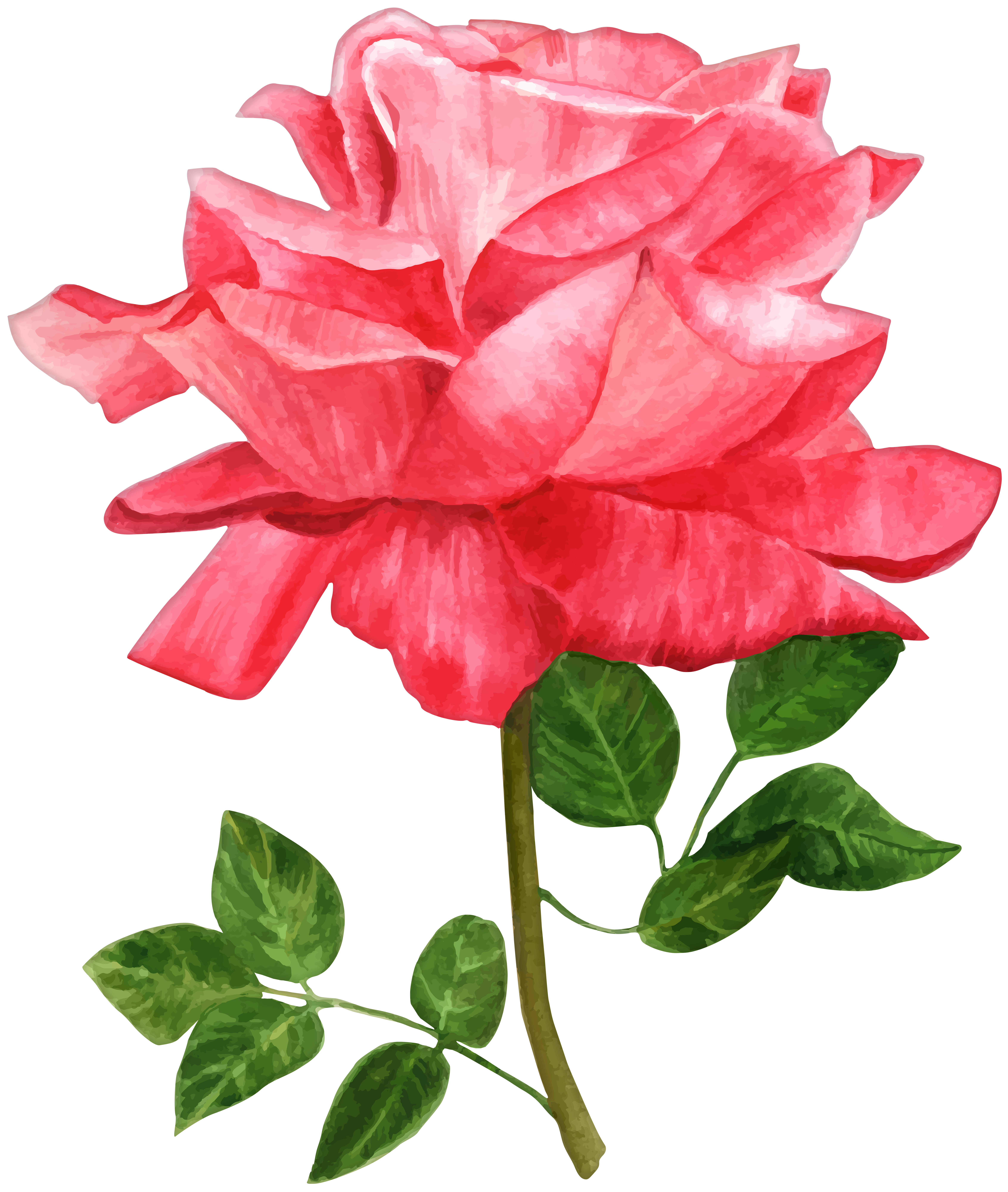 Rose clip art image. Flower png watercolor vector black and white stock