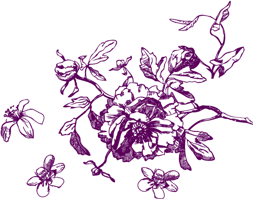 Flower sketch png. Download hd the name