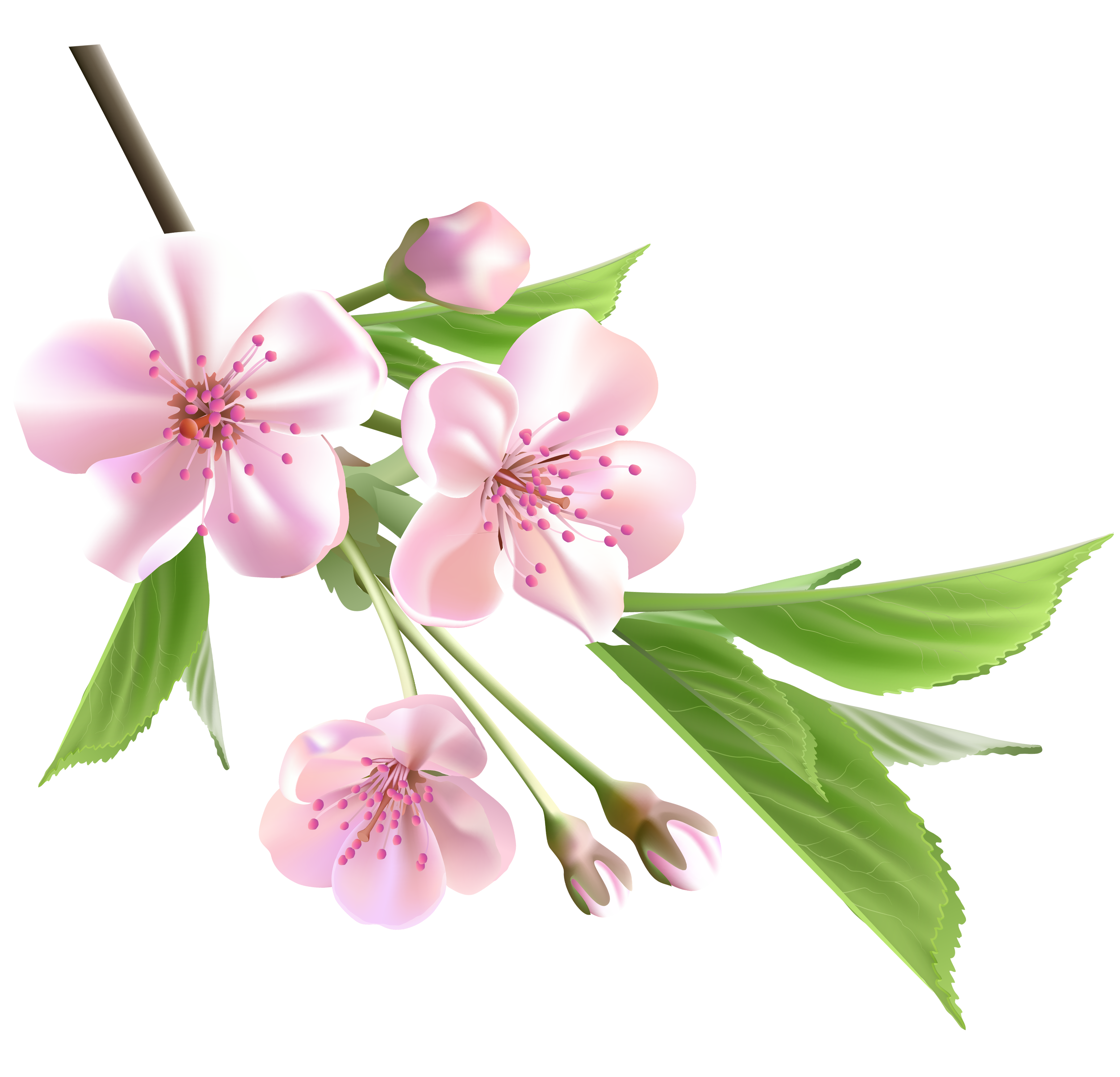 Transparent spring blossom. Branch with pink tree