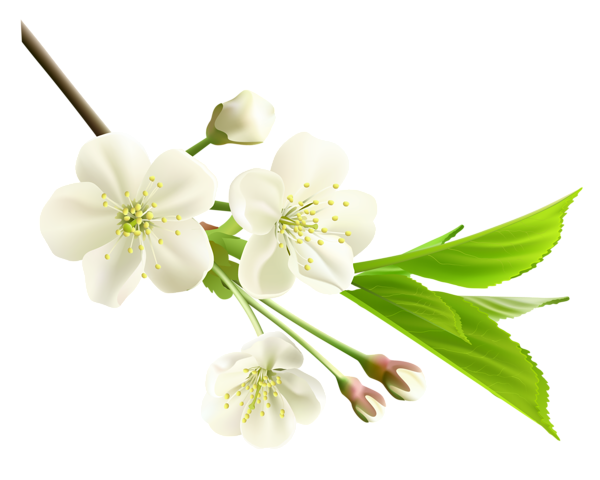 Spring flowers png. Flower photos mart