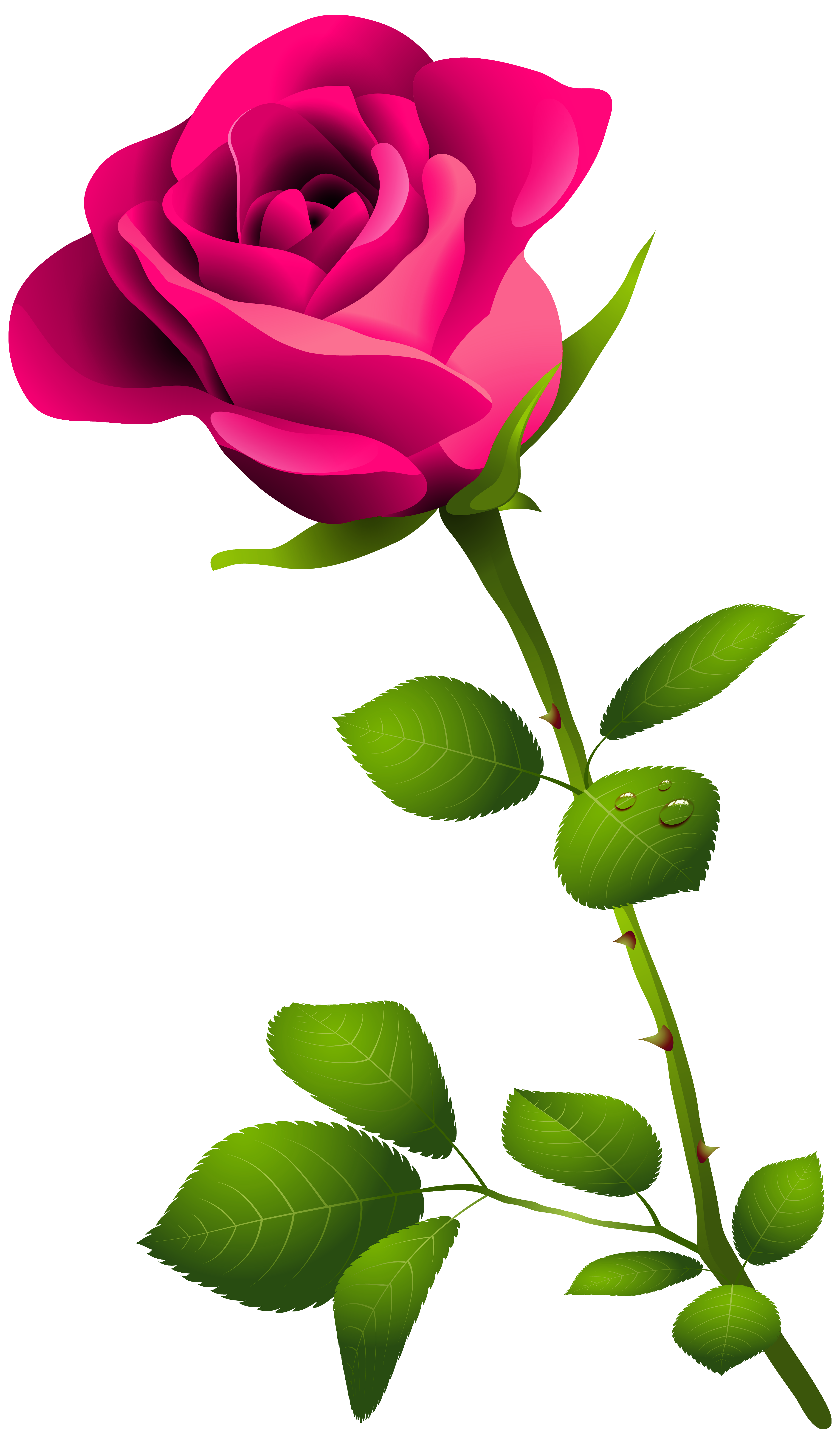 Flower stem png. Pink rose with clipart