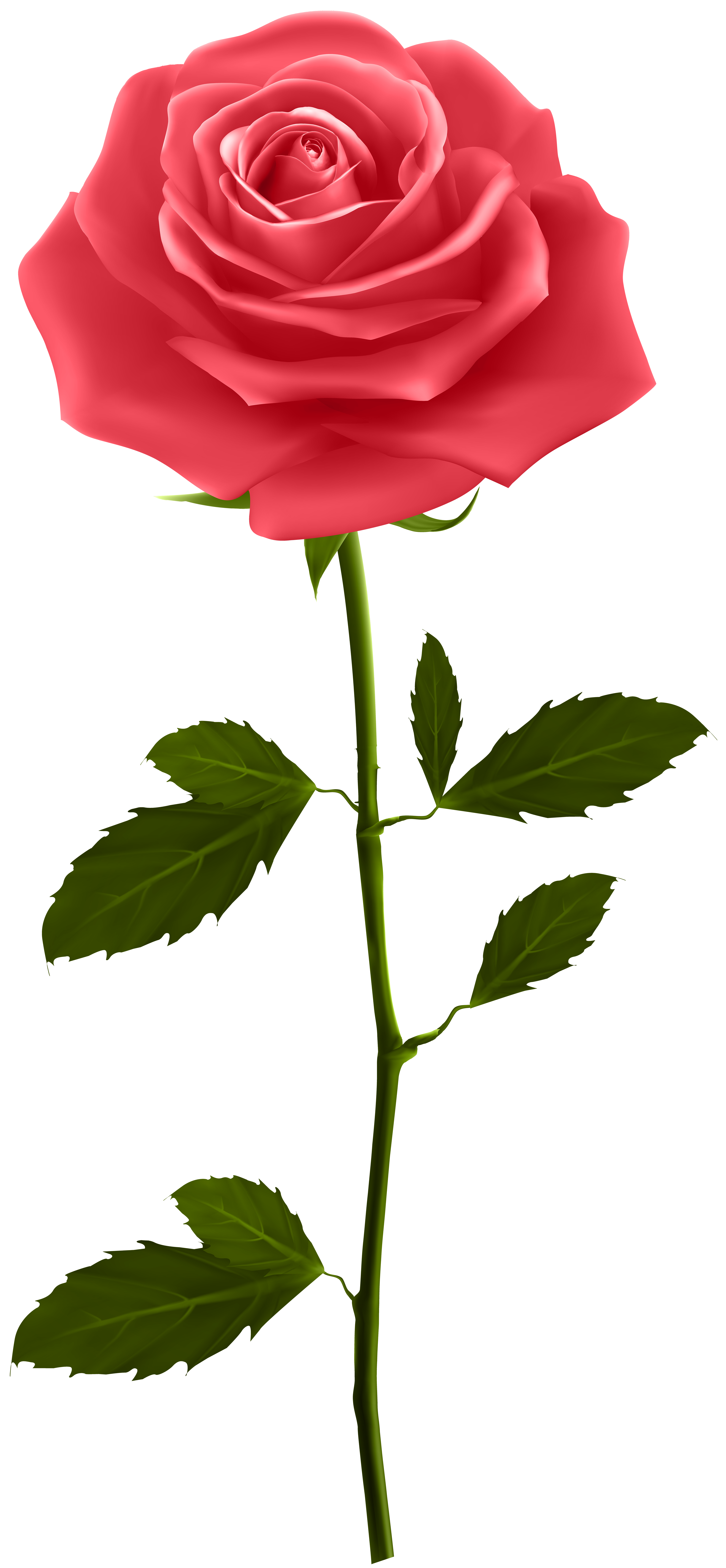 Flower stem png. Red rose with clip