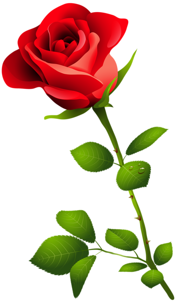 Flower stems png. Red rose with stem