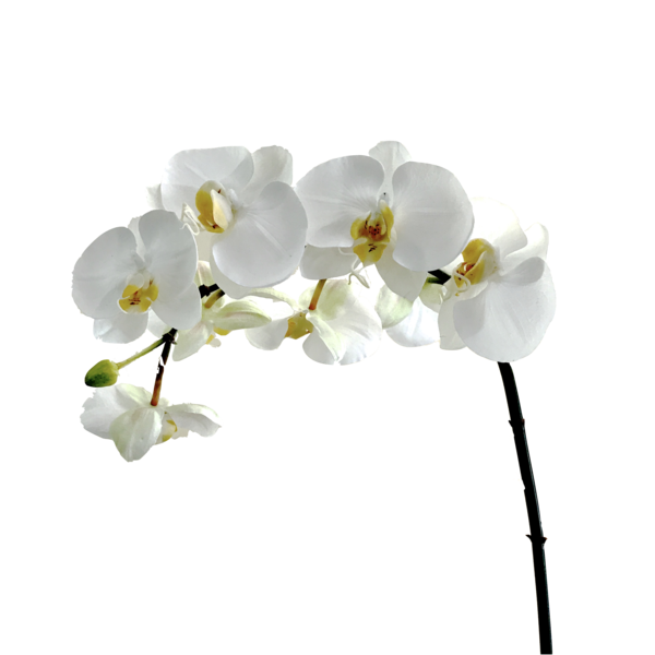 Flower stems png. Luxury artificial white orchid