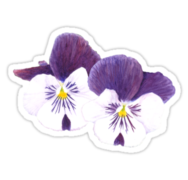Flower sticker png. White and purple pansies