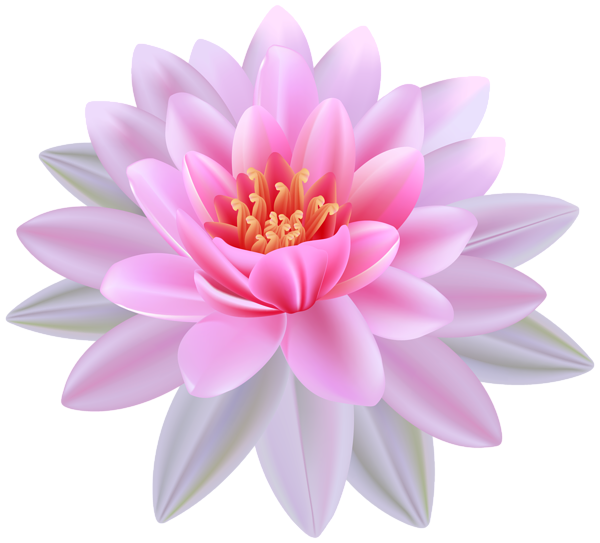 Drawing chinese water lily. Pink png clipart image