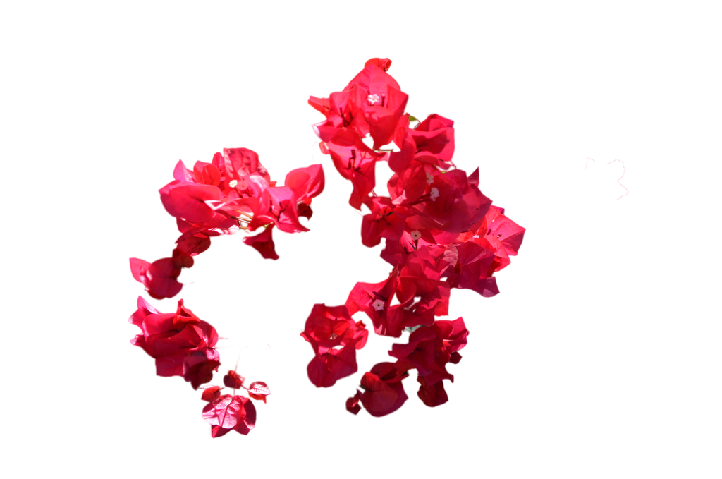 Flower stock png. Circle of red flowers