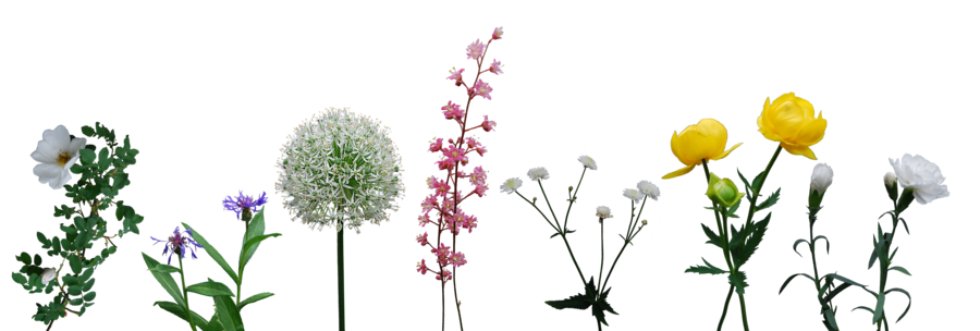 Flower stock png. Collection by eirian on