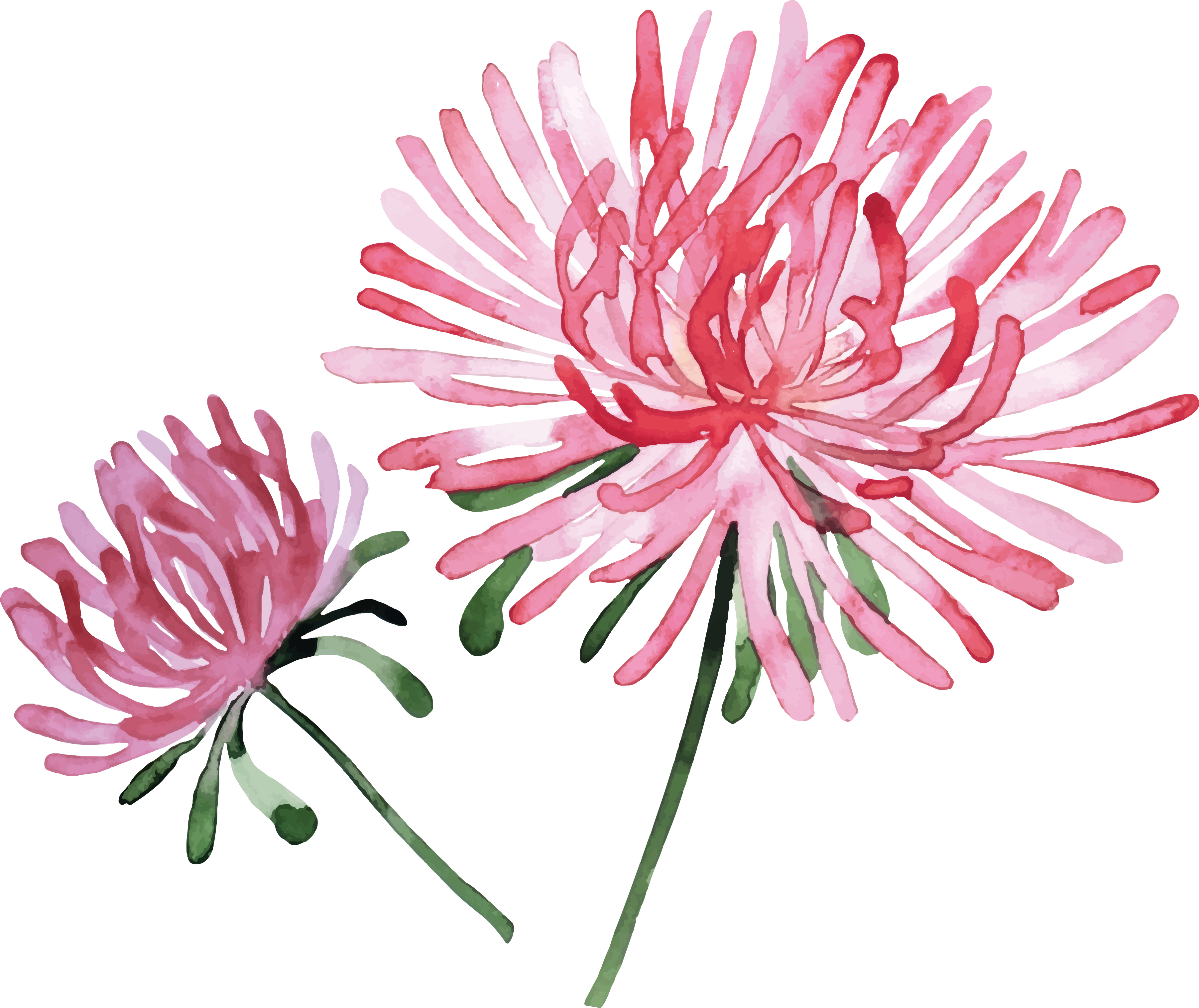 Flower stock png. Watercolor painting photography hand