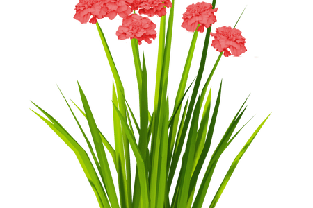 Flower texture png. Beautiful flowers various pictures