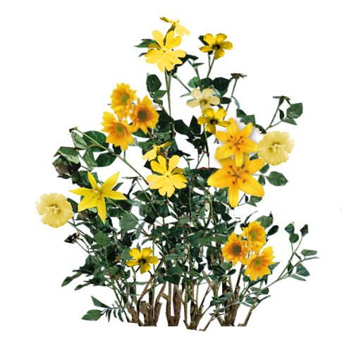 Yellow flowers png. Pin by madalina musat