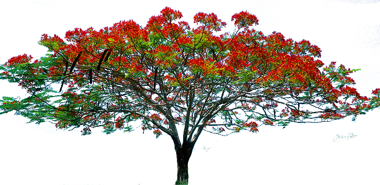 Flower tree png. Hd transparent images pluspng