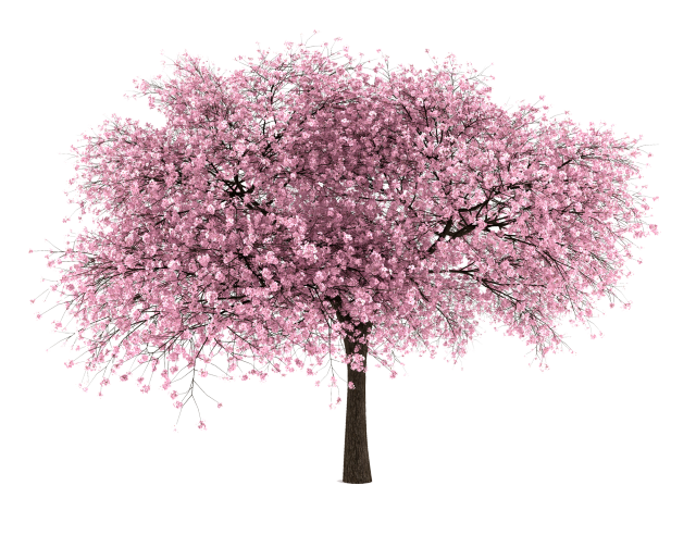 Flower trees png. Free tree images